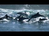 «Дельфины» под музыку Детские песни - А дельфины добрые. Picrolla